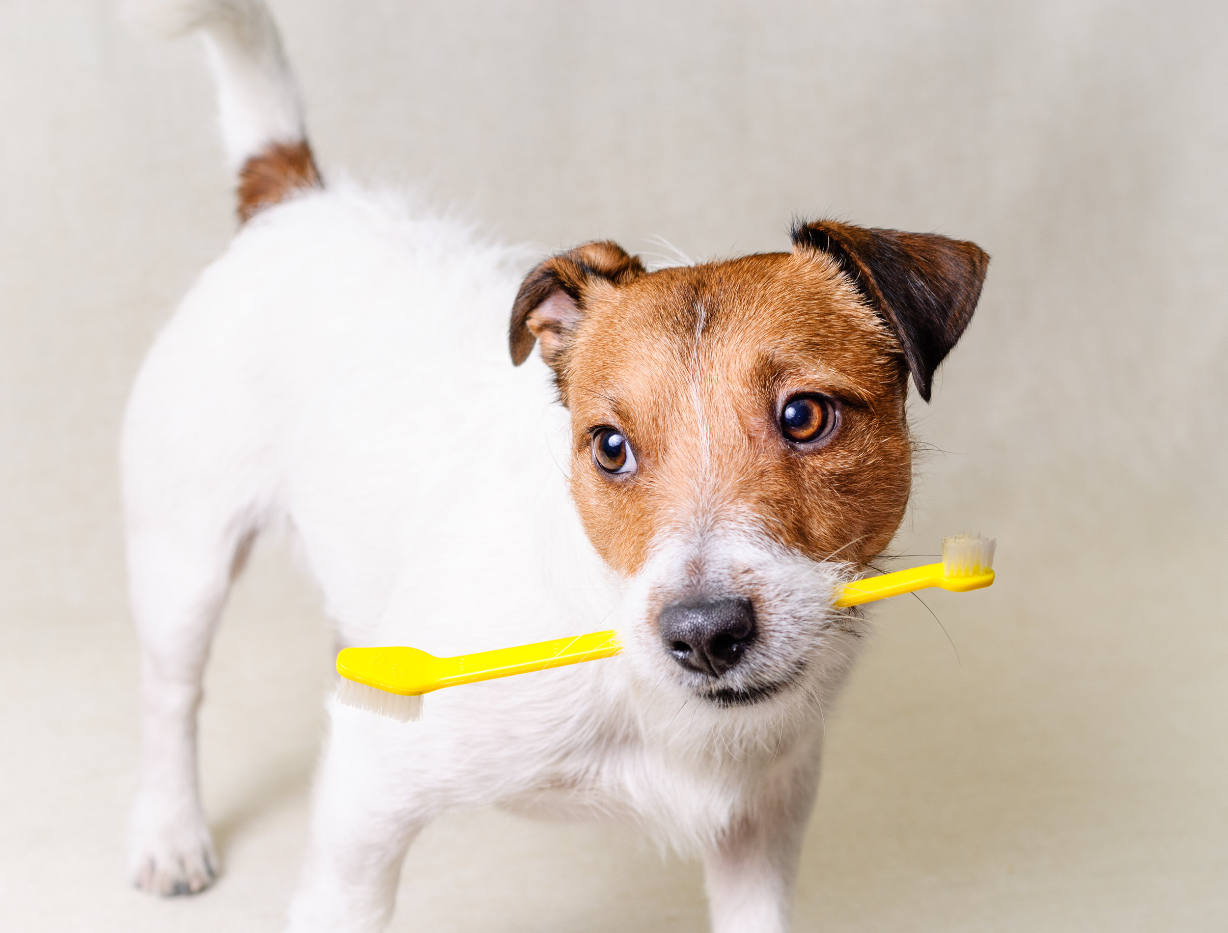 Canine Oral Health
