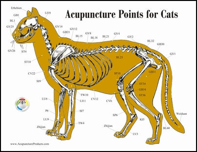 acupuncture points for cats