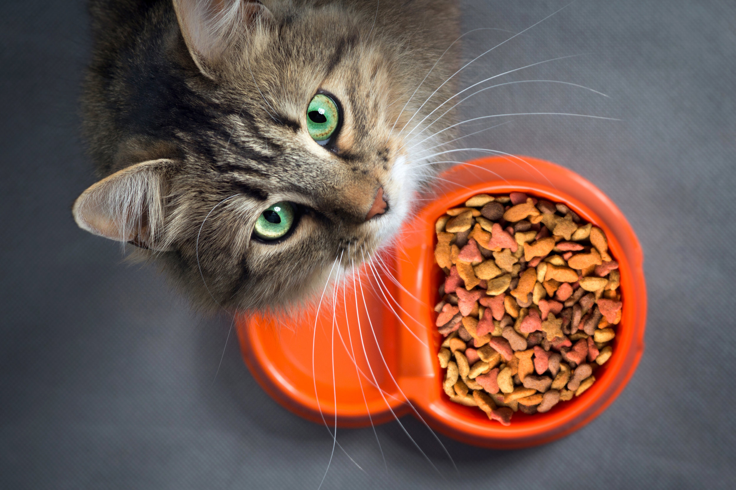 General Information About Cats And Allergies