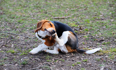 General Information About Dogs and Allergies