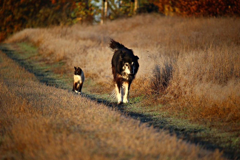 Cat and Dog running together on trail in the sun