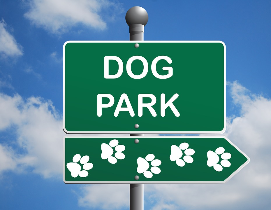 Pros and Cons of The Dog Park
