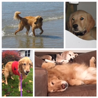 Some of the pictures we've received of Mac (his dog brother, Benny is on the bottom right with him)