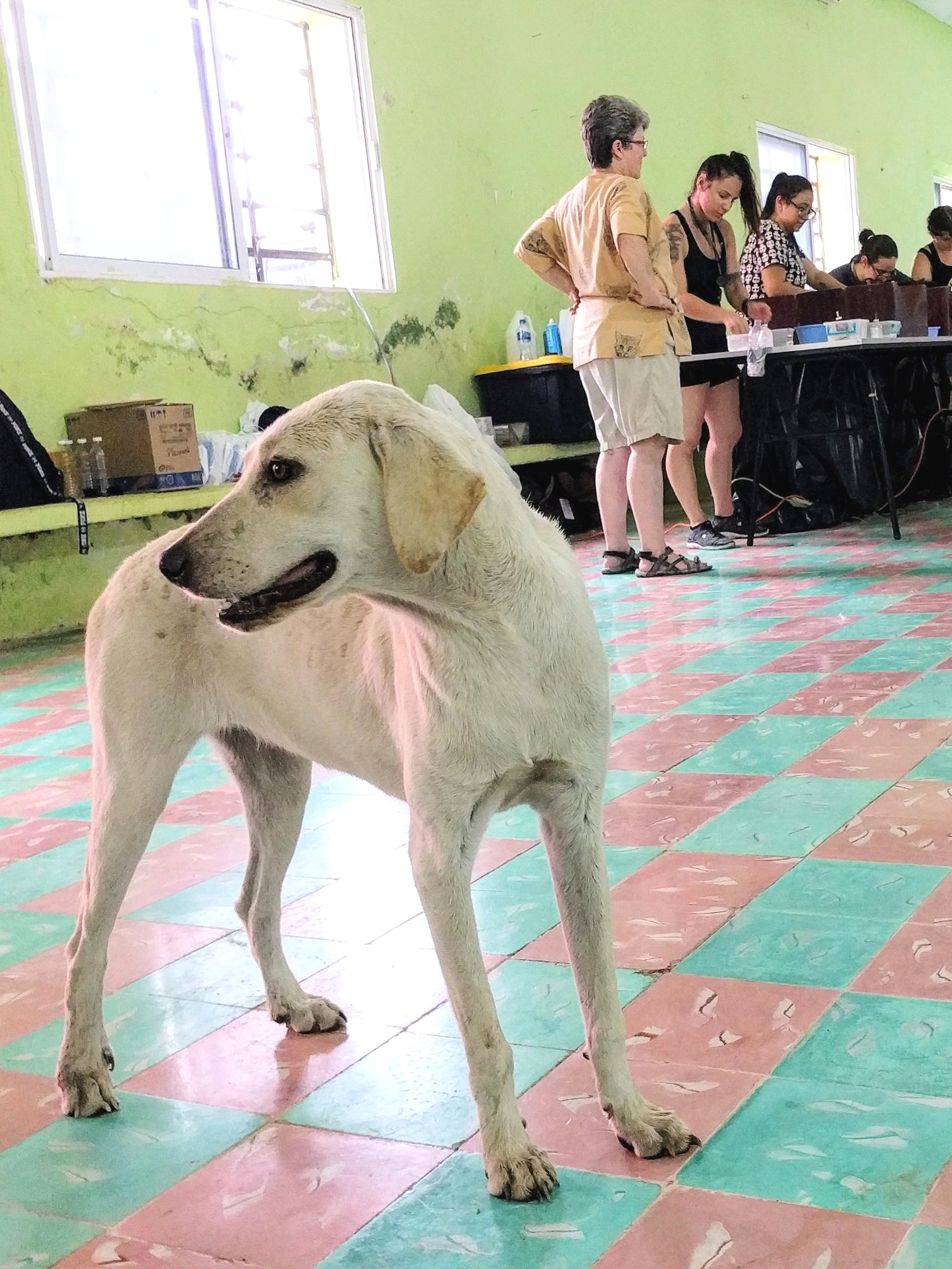 A spay and neuter mission to the Yucatan Peninsula in Mexico with Vet Techs Without Borders.