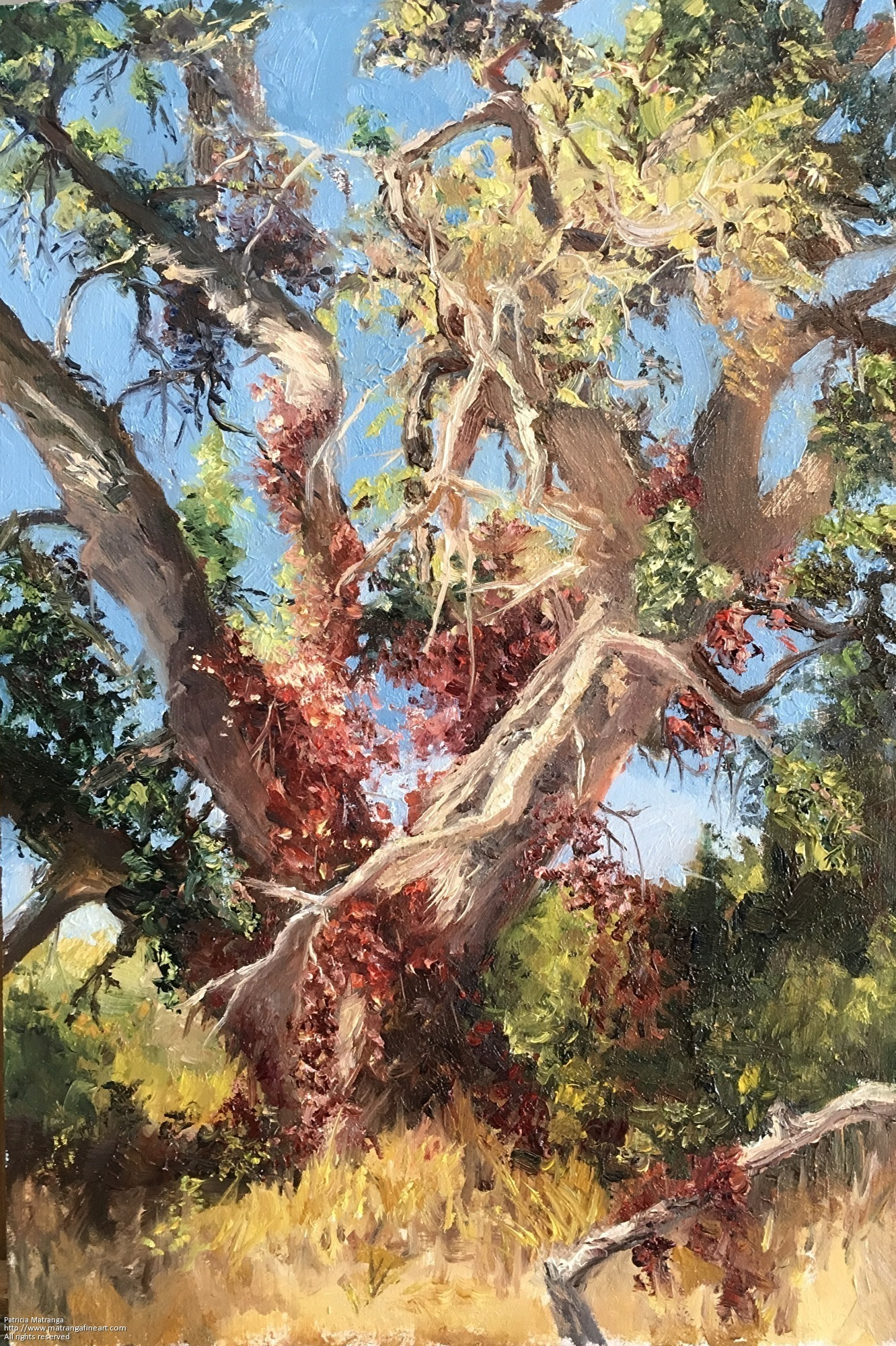 Patricia Matranga, Aged Oak Beauty