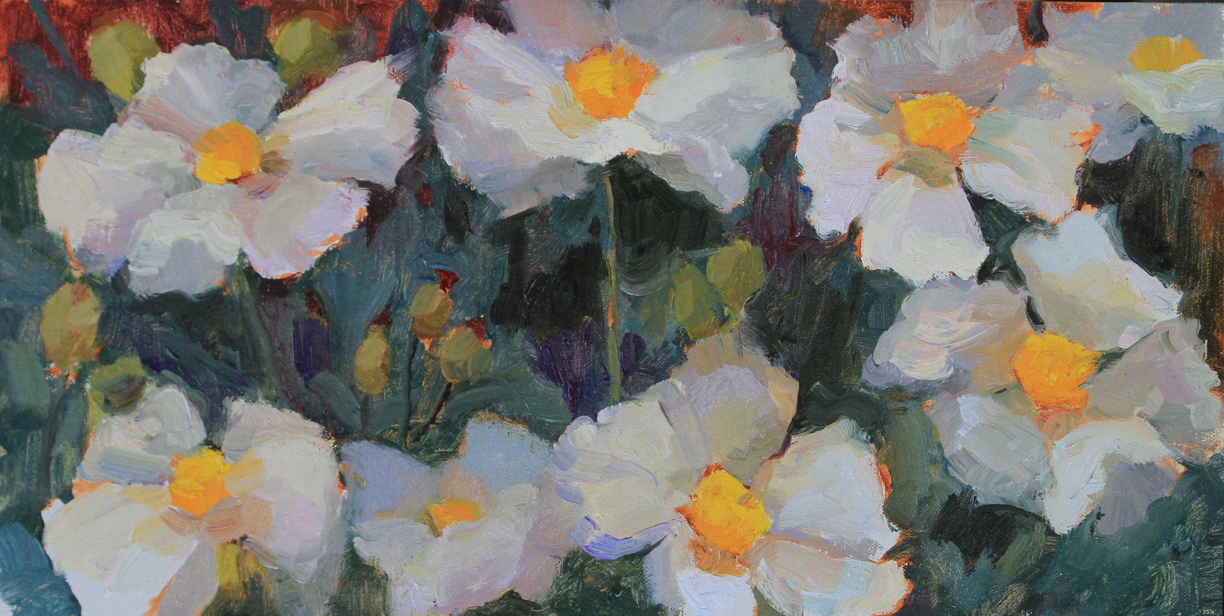 Rose Irelan