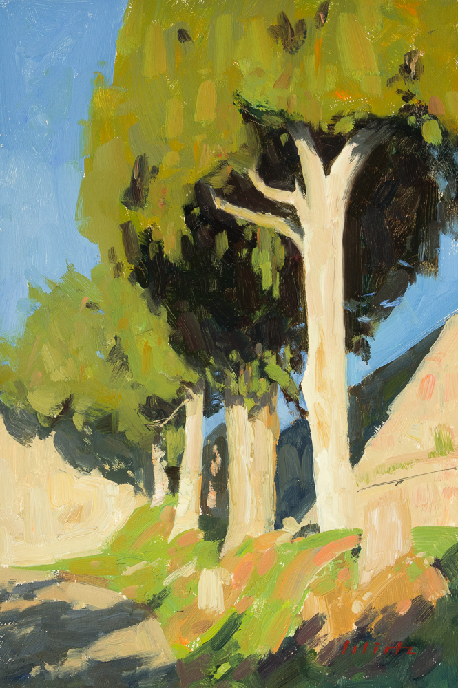 Bjoern Wirtz, Afternoon Cypress Trees