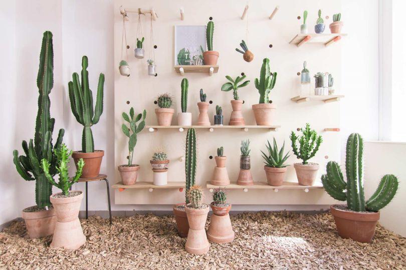 cactus-plants-at-kaktus-kobenhavn-store-copenhagen-denmark-conde-nast-traveller-30march17-pr_.jpg