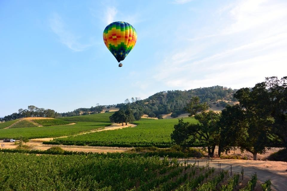 Napa Valley Hot Air Balloon.jpg