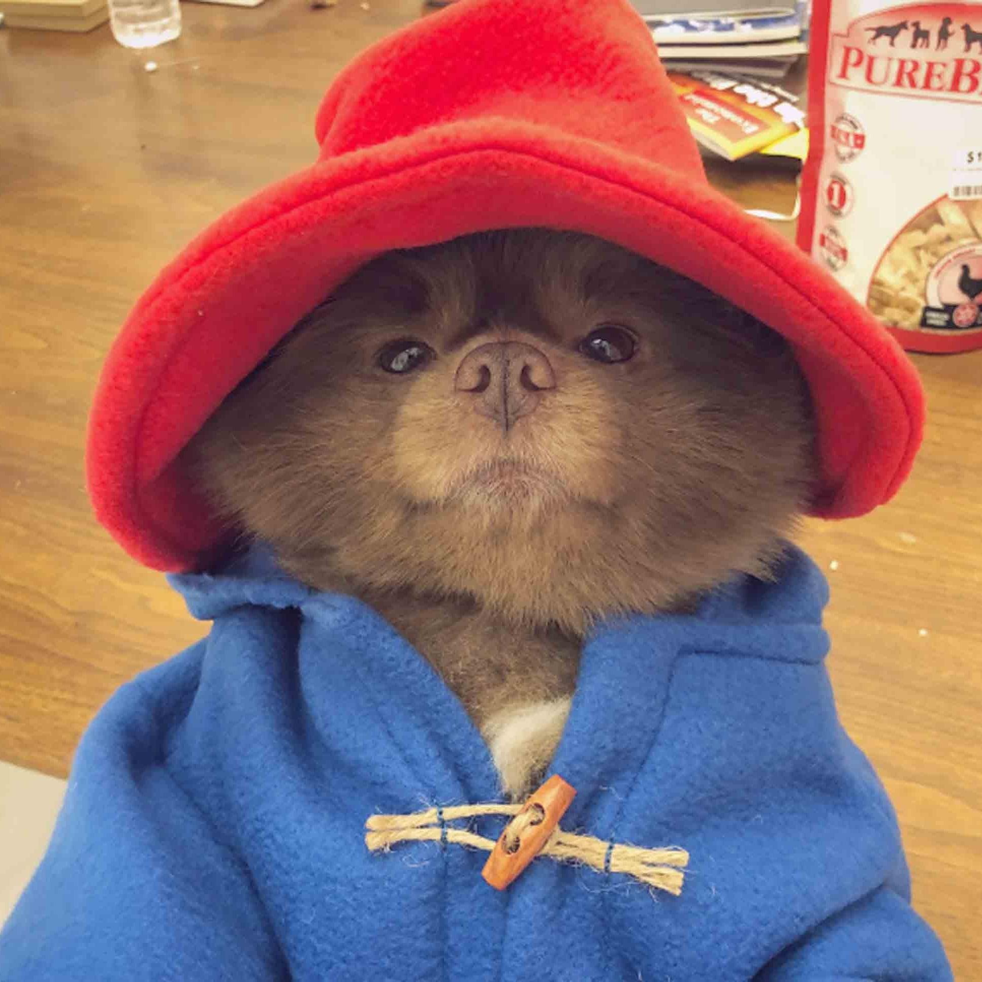 Bertram the Pomeranian