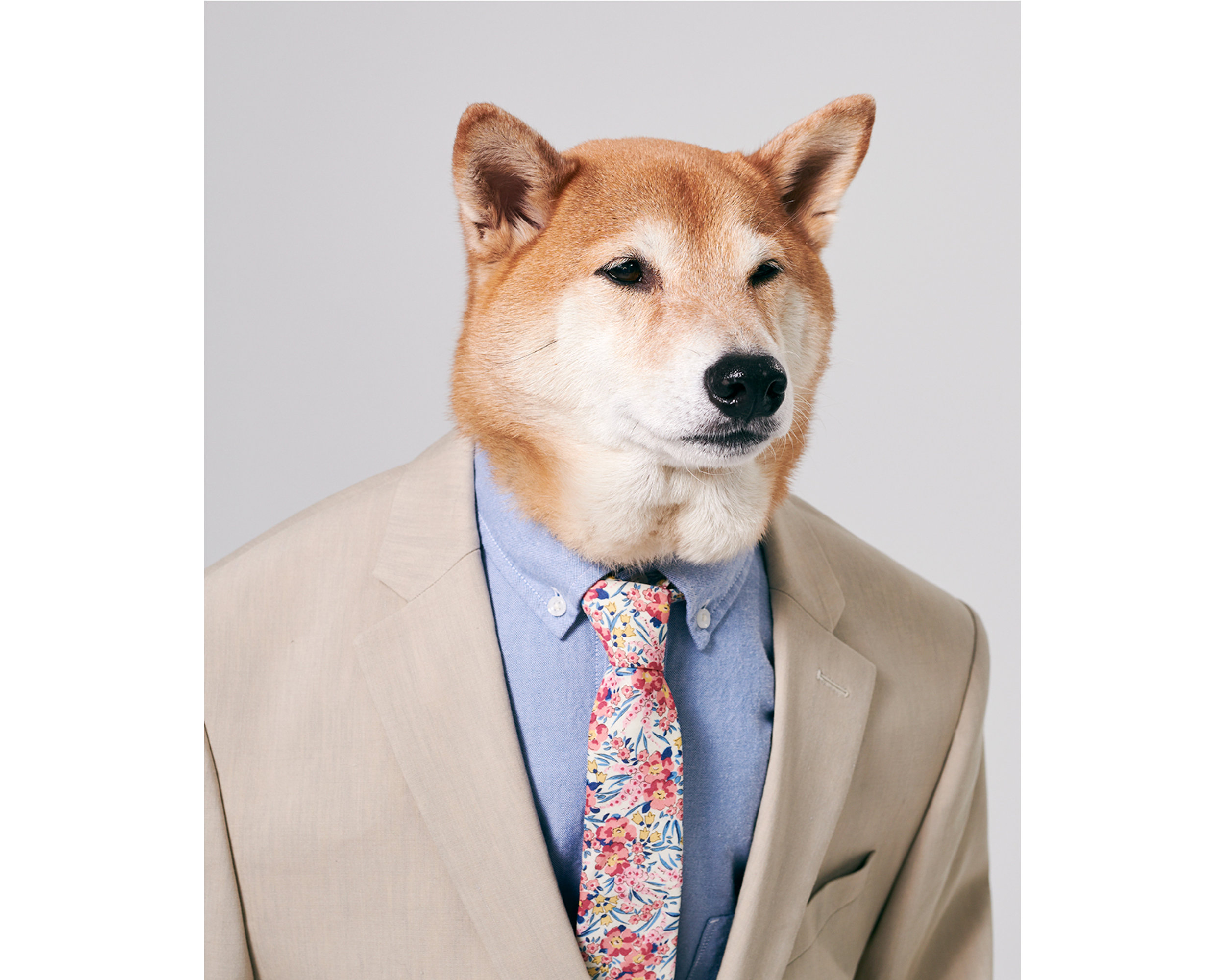 Menswear Dog courtesy express.com.jpg