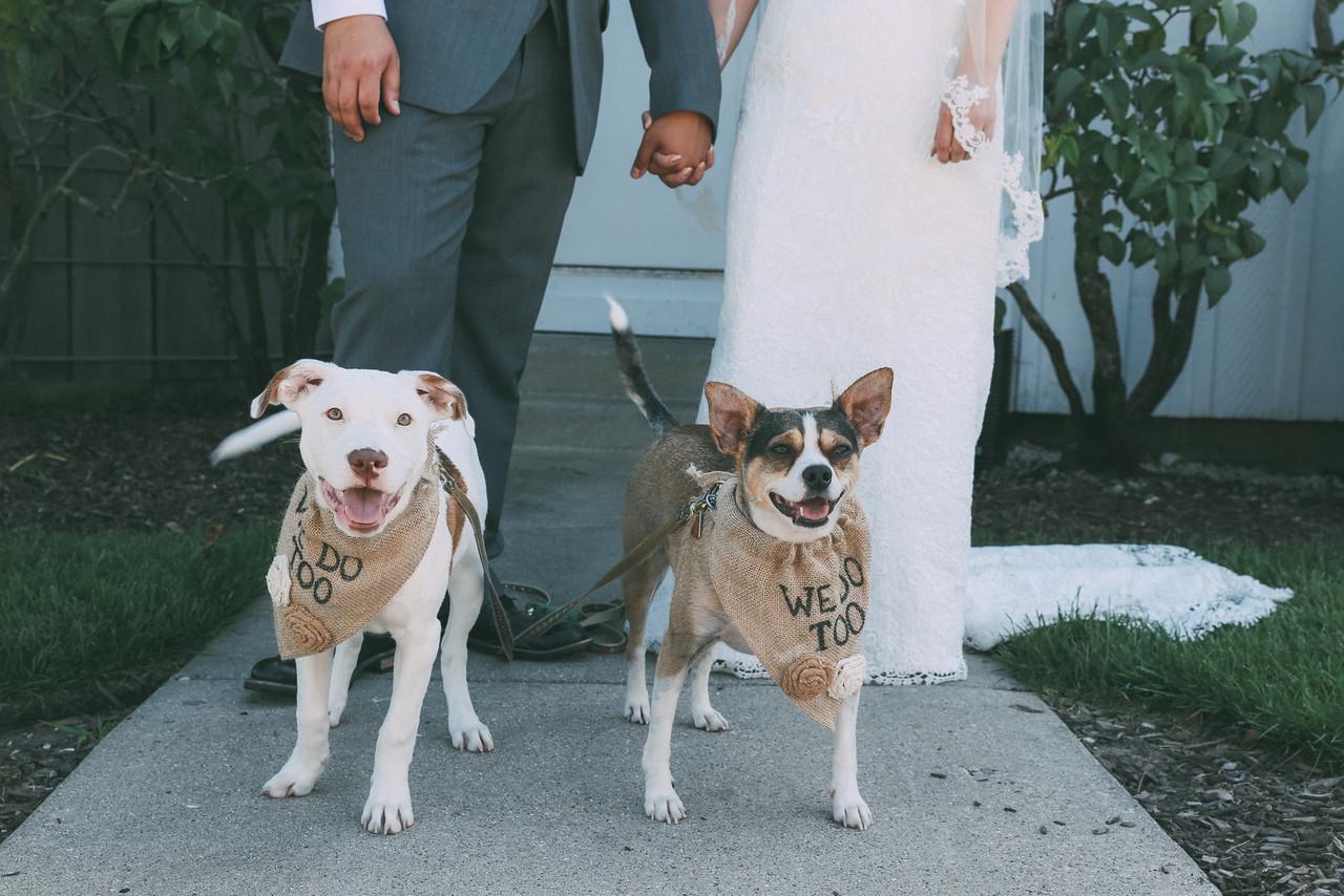 Le Cape Weddings - Grayslake Weddings - Cara and Jeffrey 3518-X2.jpg