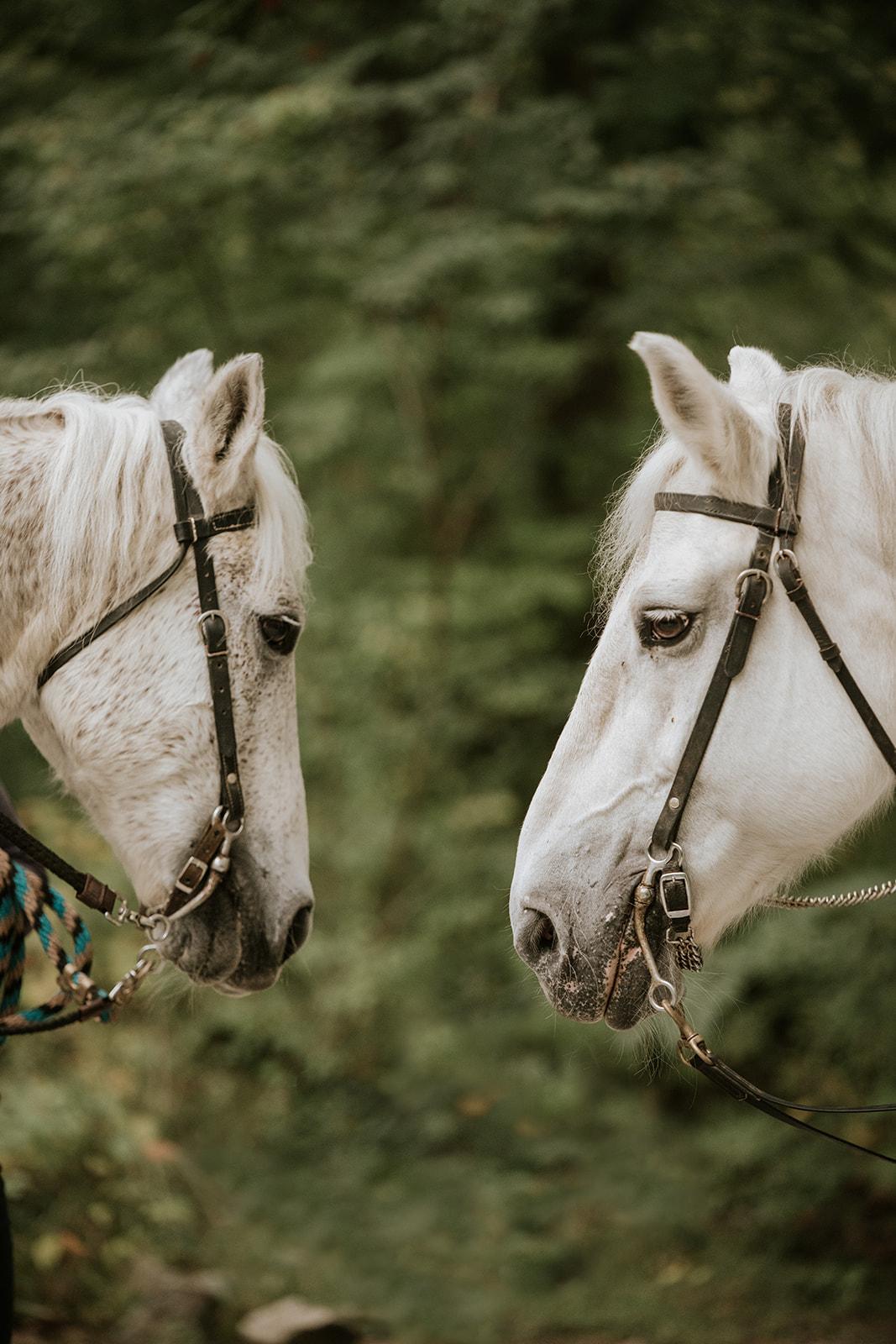 Le Cape Weddings - Boho Styled Shoot - Bride on Horse -5.jpg
