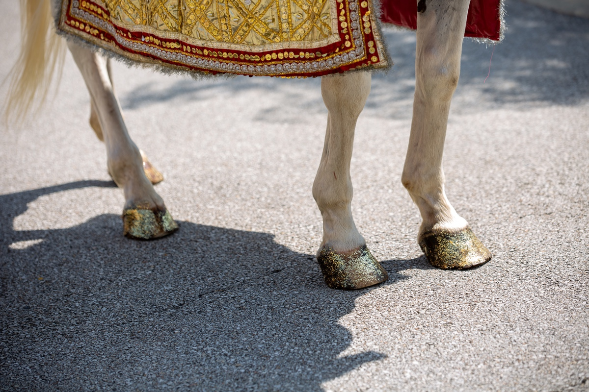 Le Cape Weddings - South Asian Wedding - Chicago Wedding Photographer P&V-57.jpg