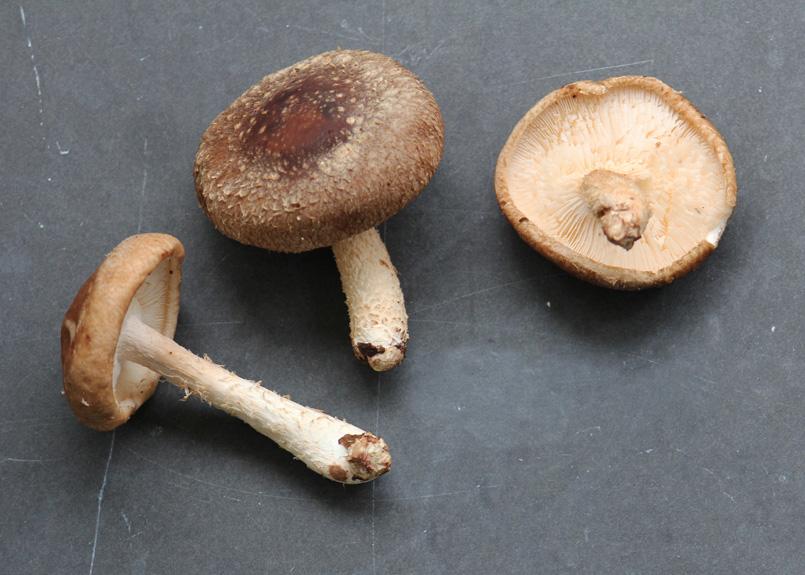 SFC_mushrooms_shiitake.jpg