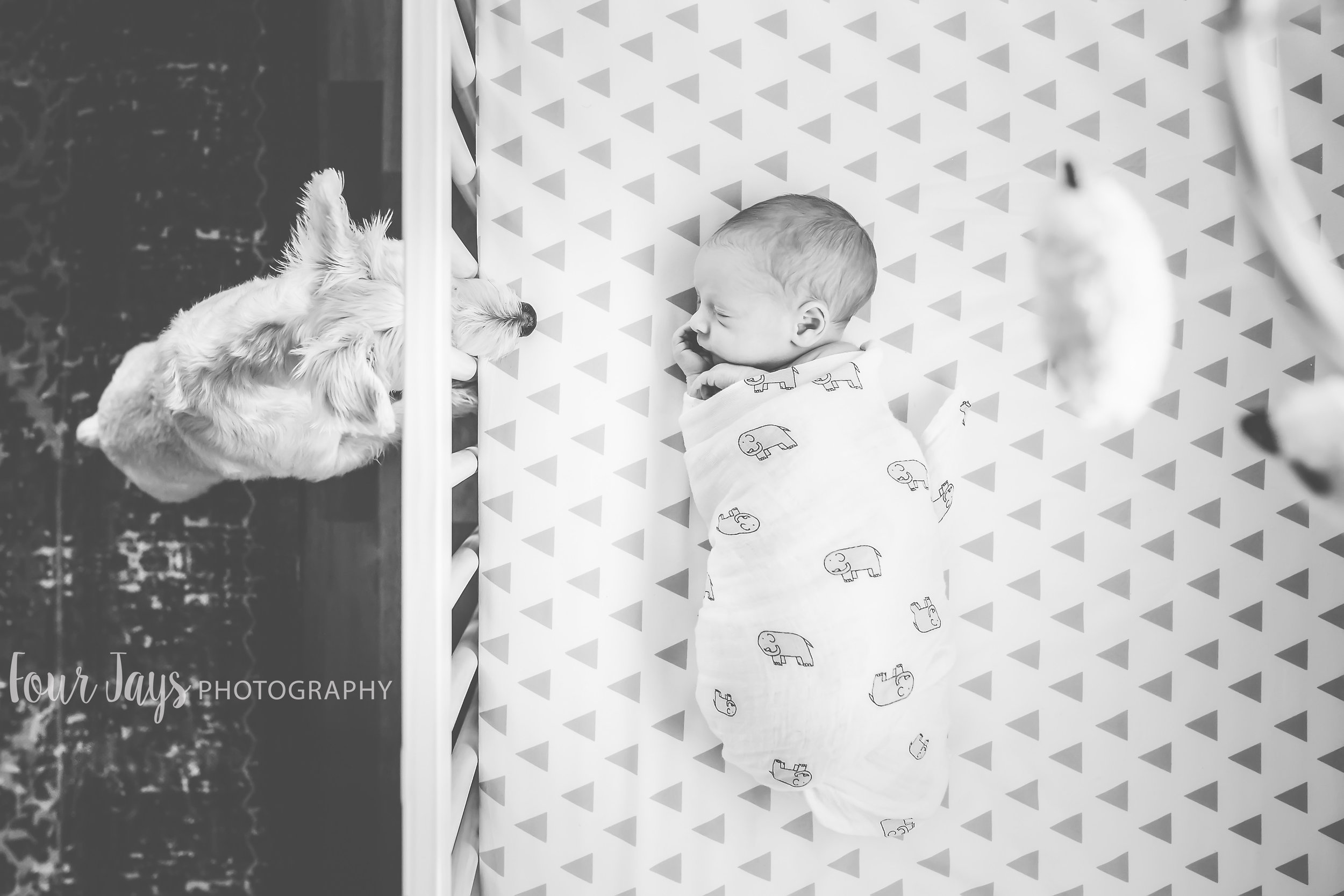 In home newborn session family dog best portland oregon-1.jpg