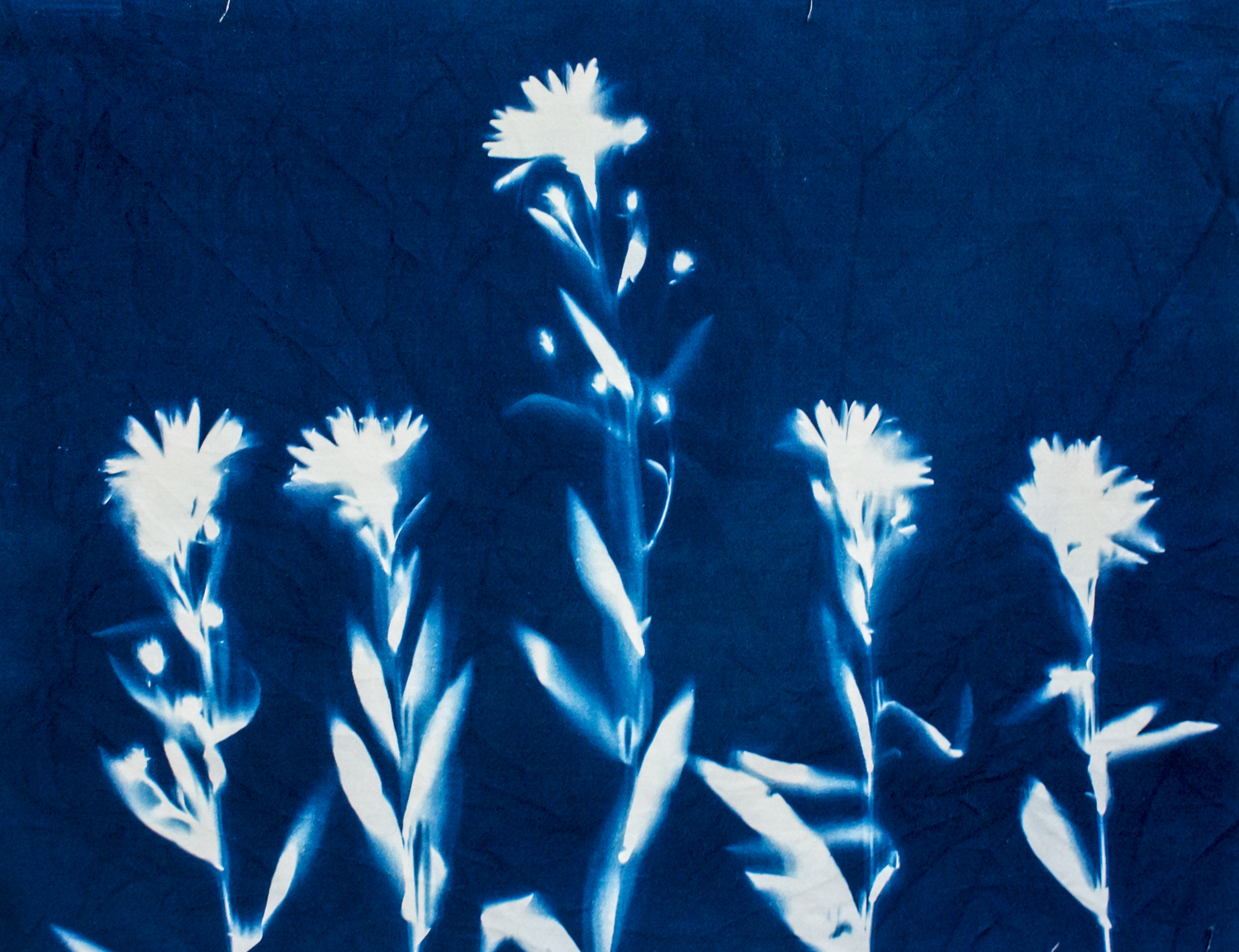 Detail of panel -- Aster