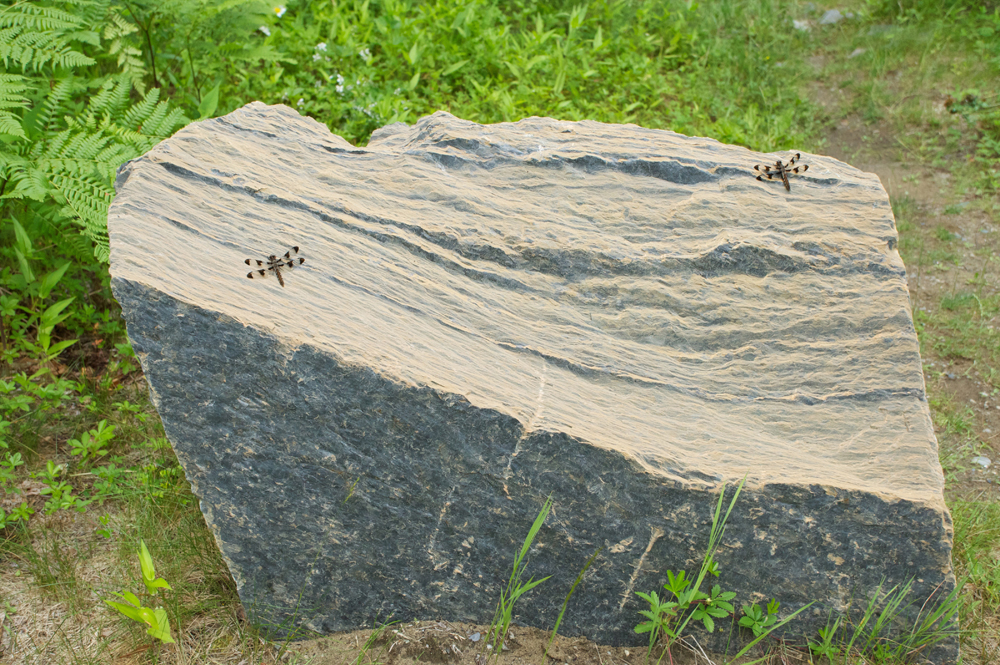 Dragonflies on Rock