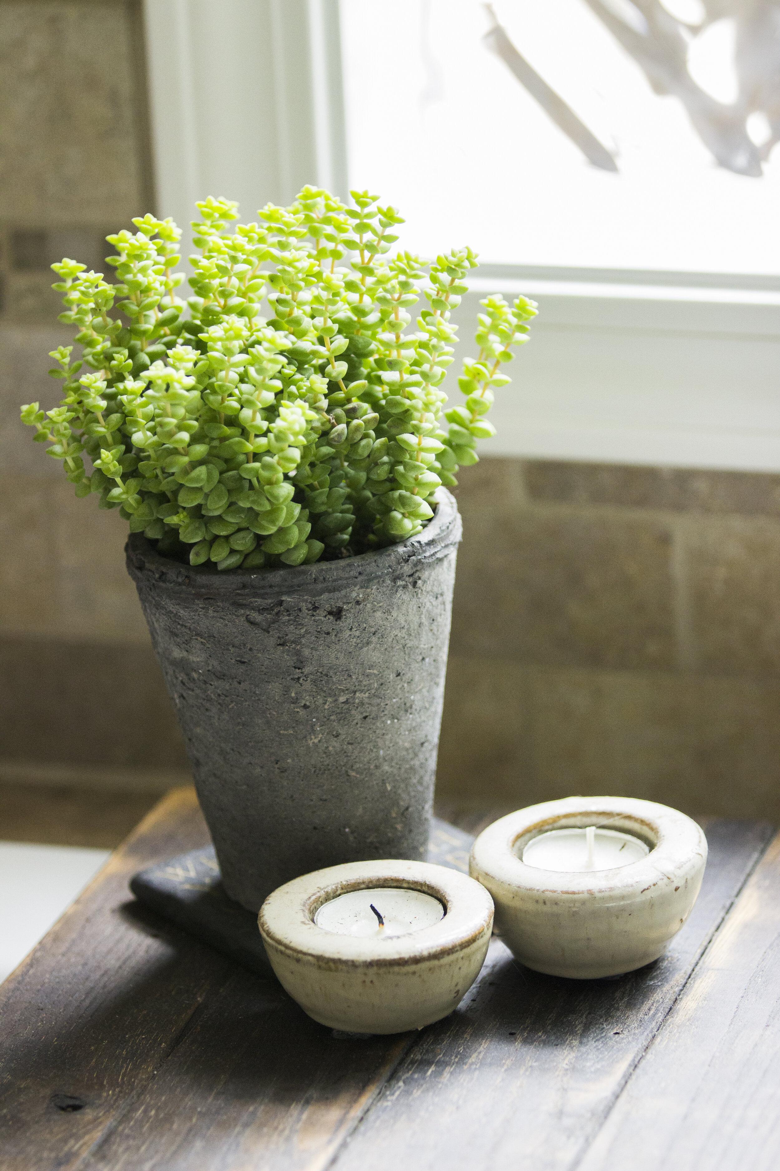 Plant on bathroom window sill.