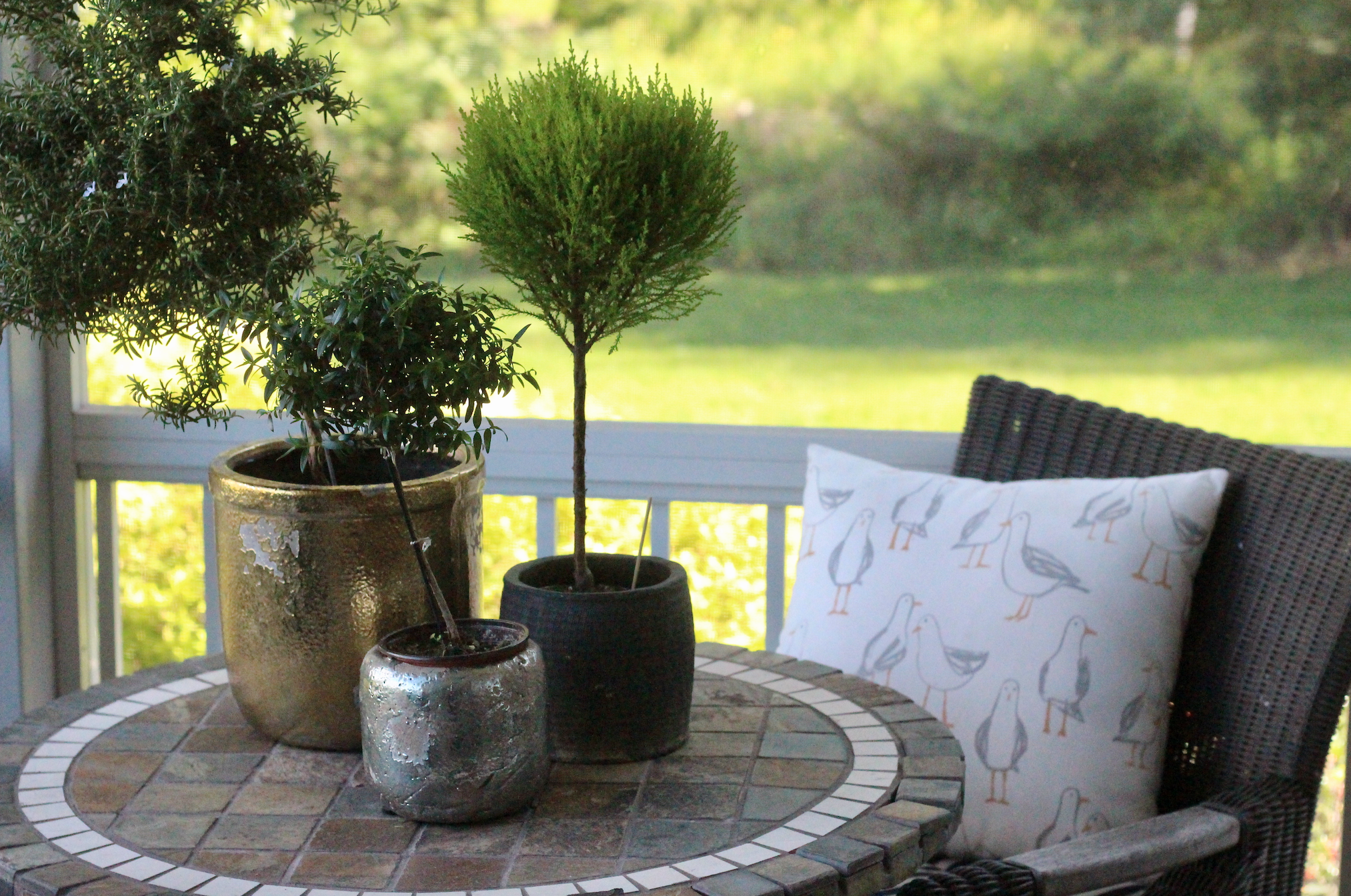 Topiaries on a patio.