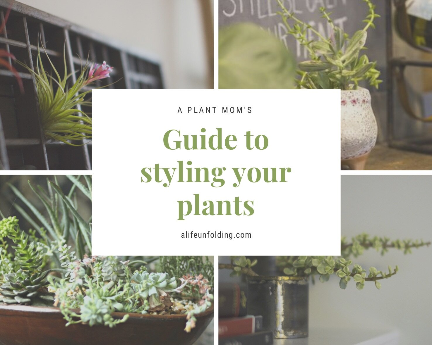 Plant styling guide.