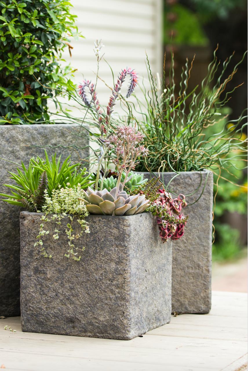 Cement Succulent Planters