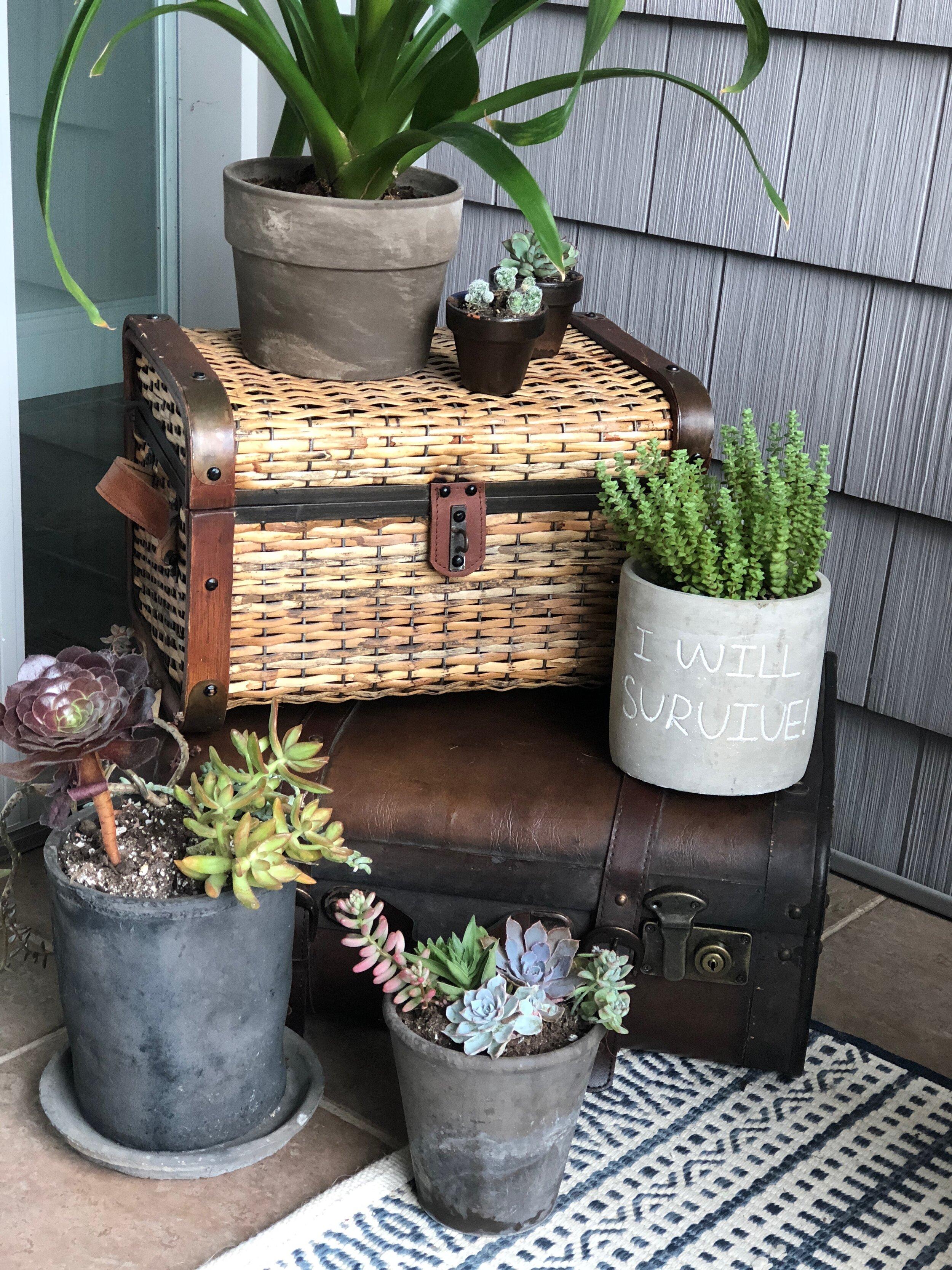 Houseplants on vintage trunks