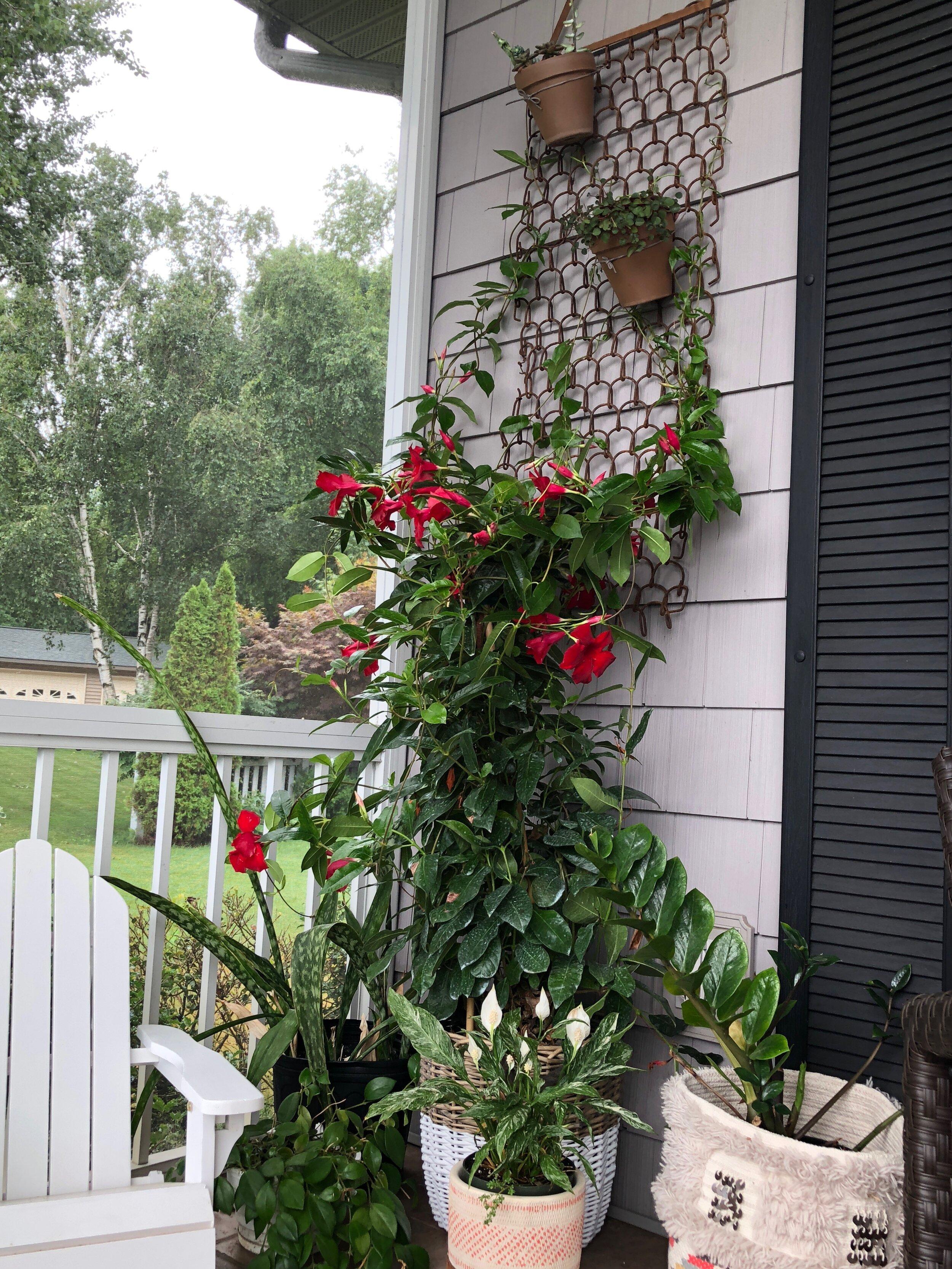Trailing plants on porch