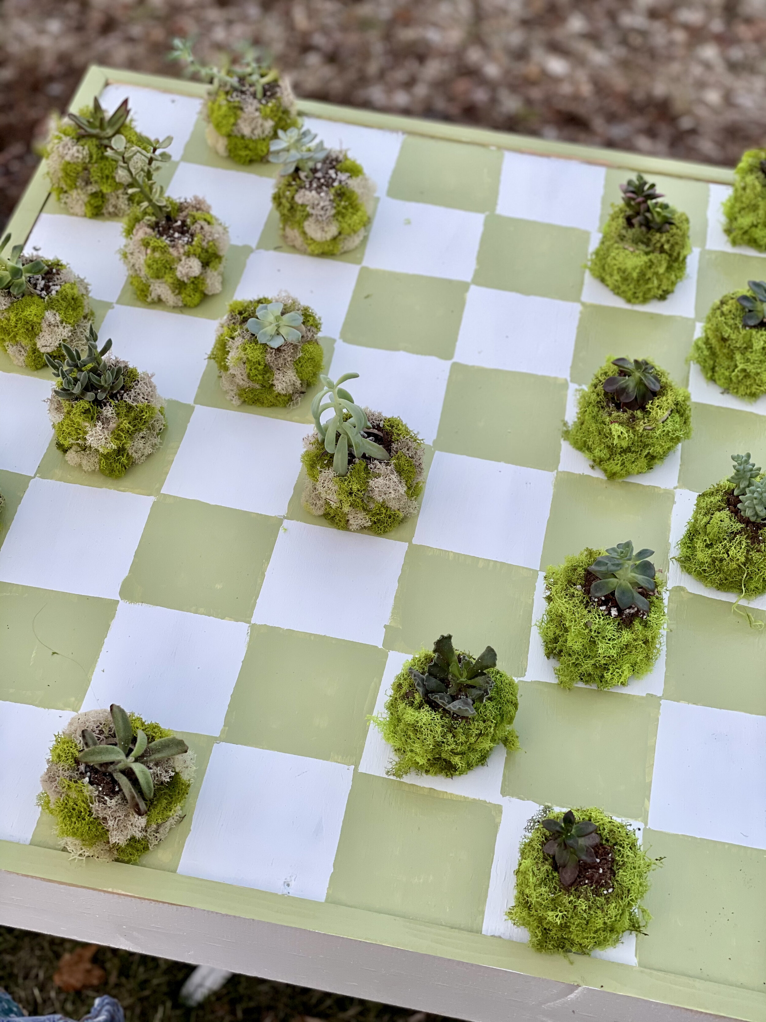 Green and White Outdoor Checkerboard with succulent game pieces