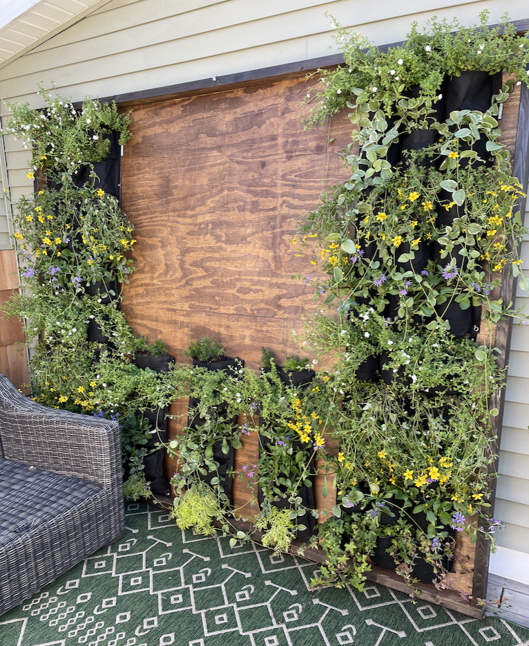 The Living Wall planted. I am planning on a Giant Letterboard in the middle.
