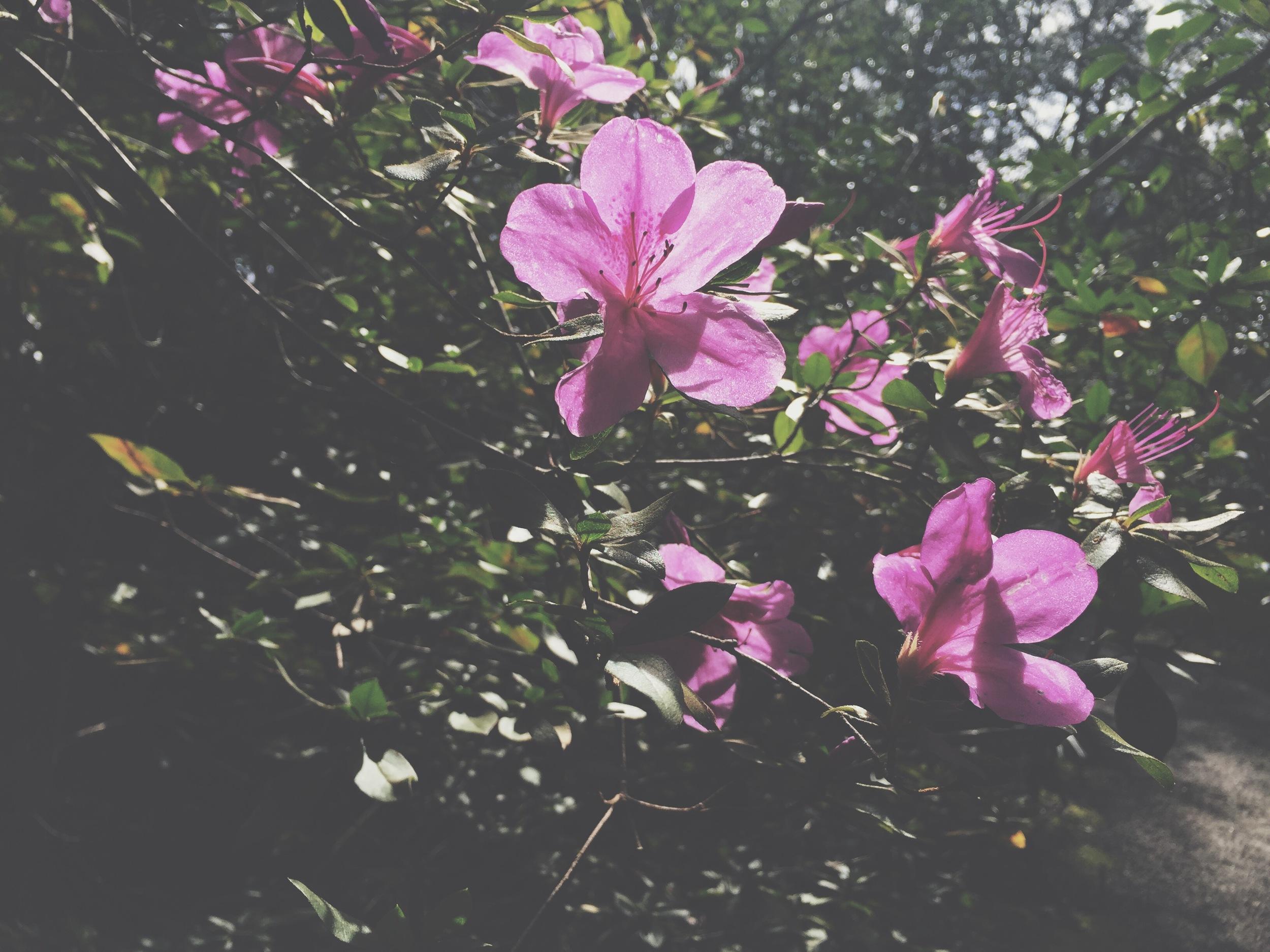 Flowers at Magnolia Plantation