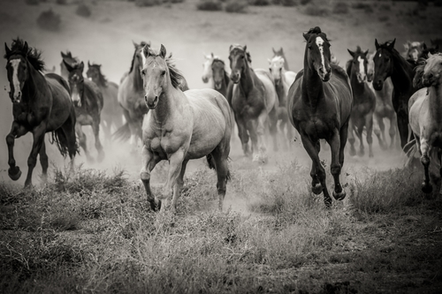 val-westover-photography-expedition-montana-horses