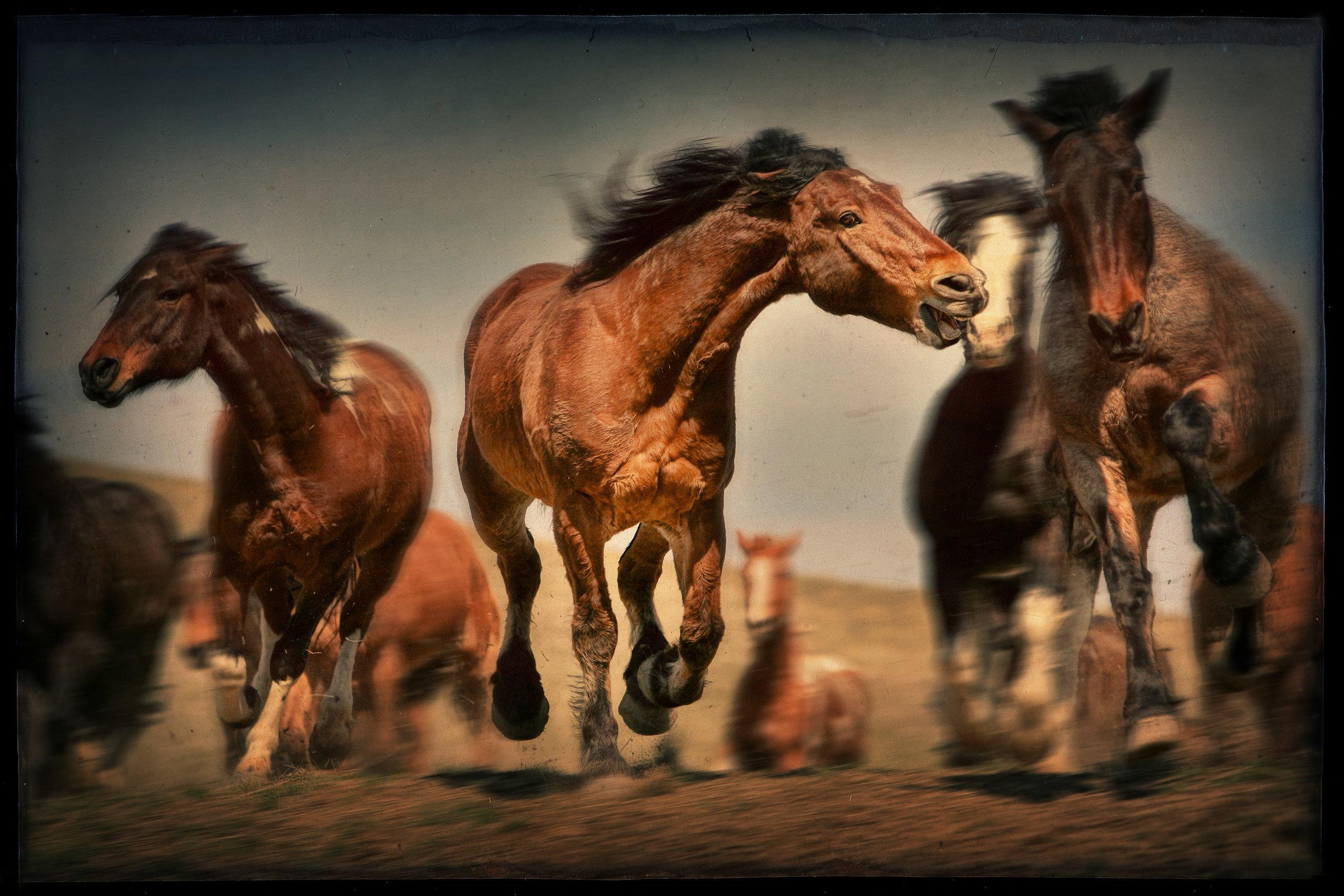 Stephanie Leventhal horses final.jpg