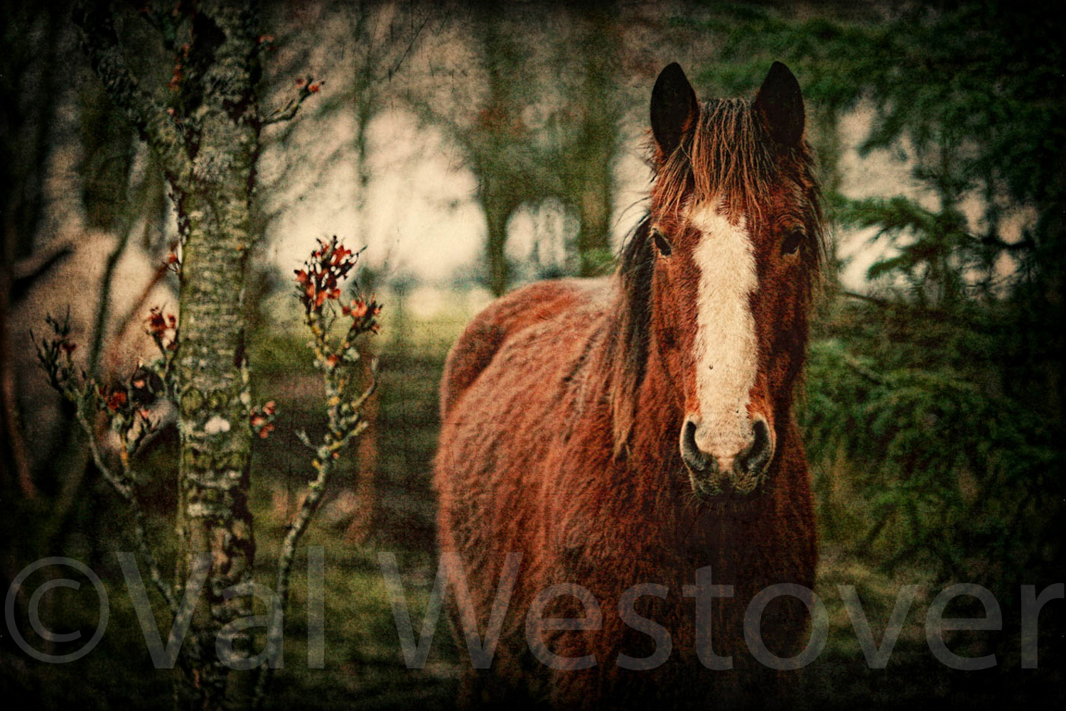 val-westover-photography--38.jpg