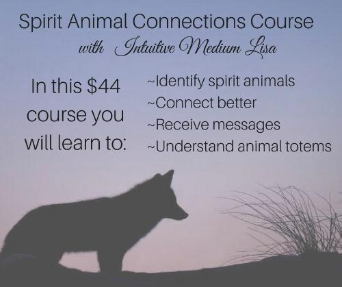 Spriti Animal Connections.jpg