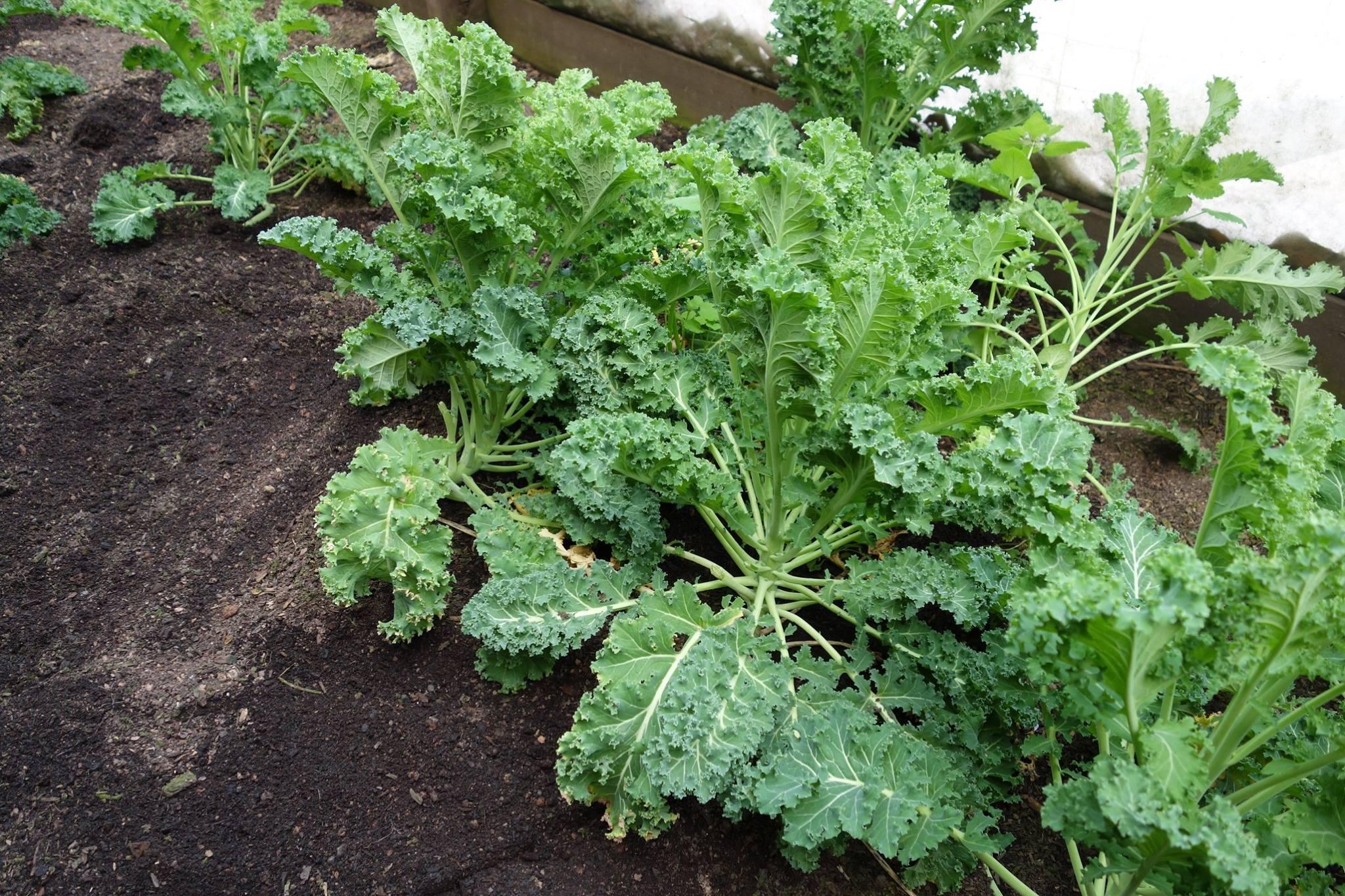 whole-foods-plant-based-diet-vegetables