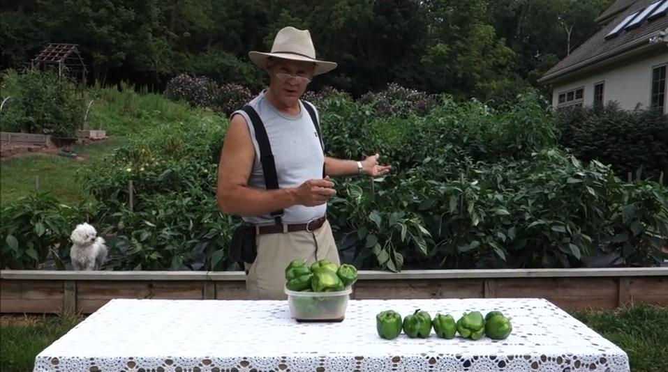 farmer-fred-green-bell-peppers-organic-veggie-garden