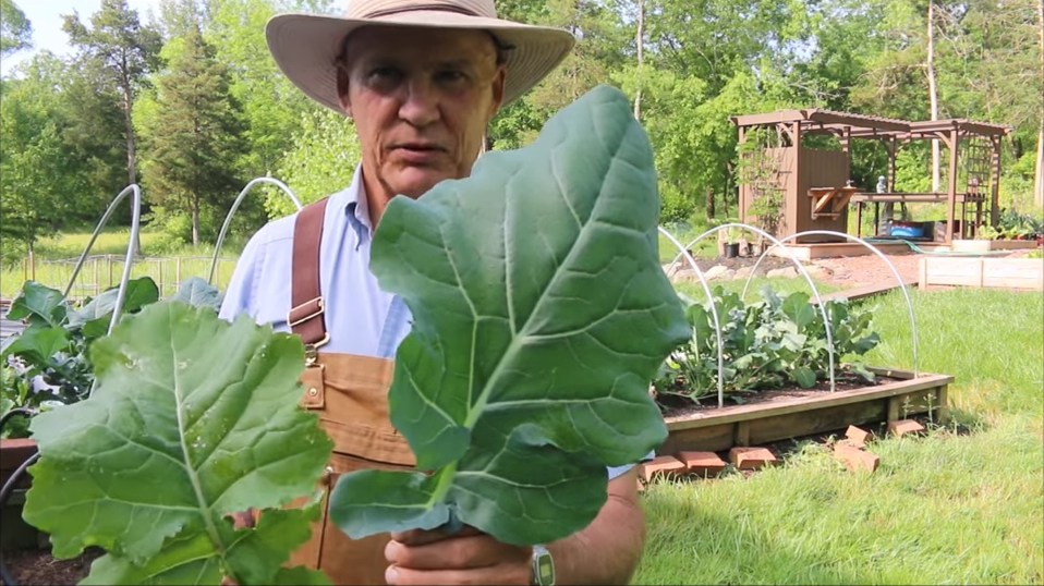 Farmer Fred comparing a Broccoli Leaf with a Collard Green