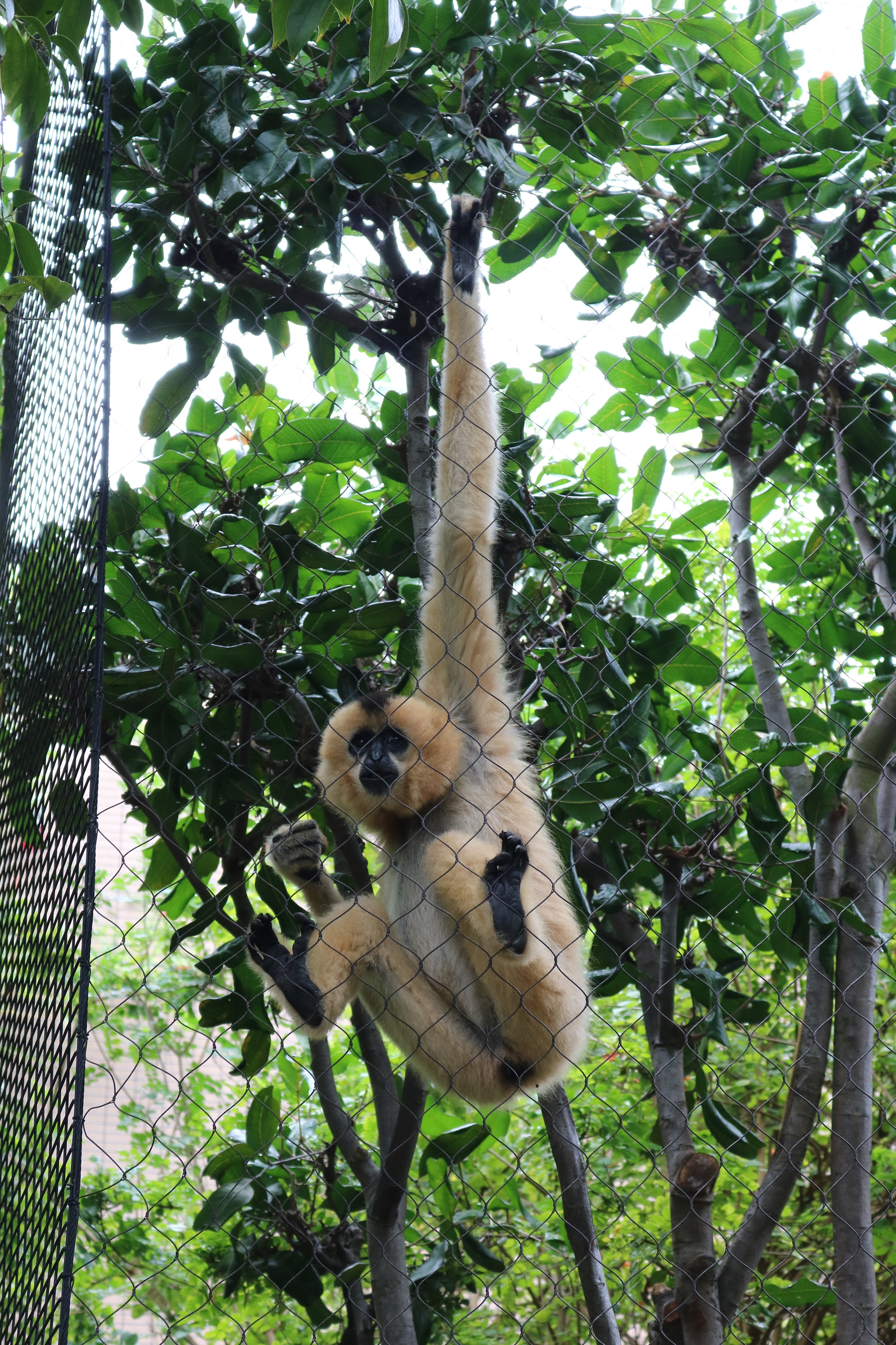 monkey-hanging-san-diego-zoo