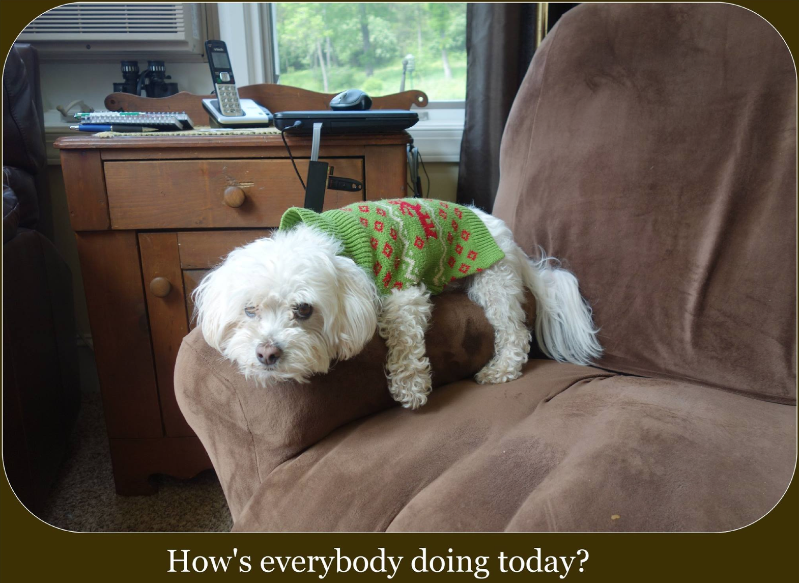 """Bailey wanted to say """"Hello!"""" and offer you some encouragement as you work through making a WFPB diet budget friendly!"""