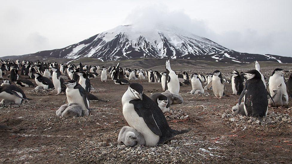 penguin-island-planet-earth-ii