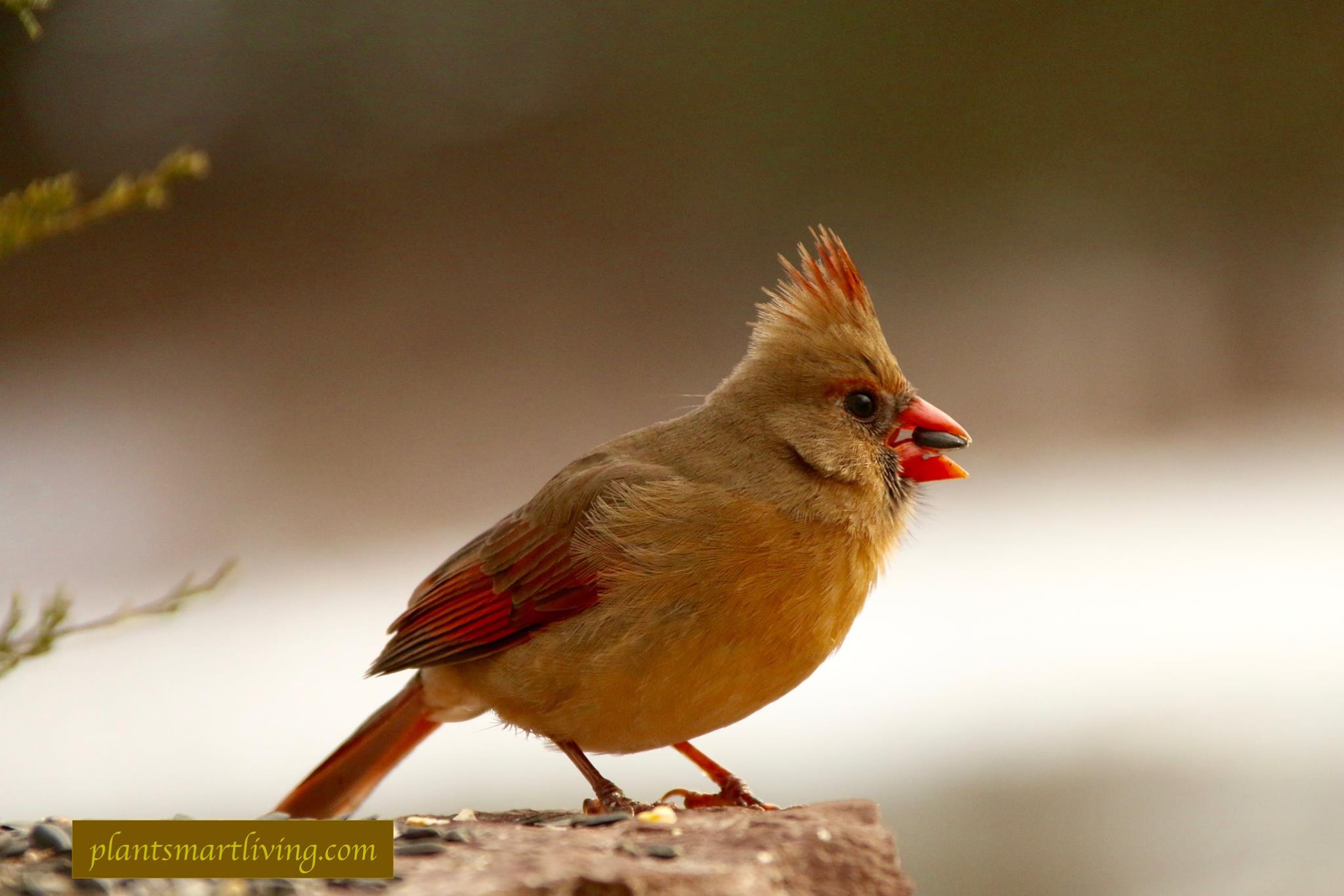cardinal-photograph-plant-smart-living-with-farmer-fred