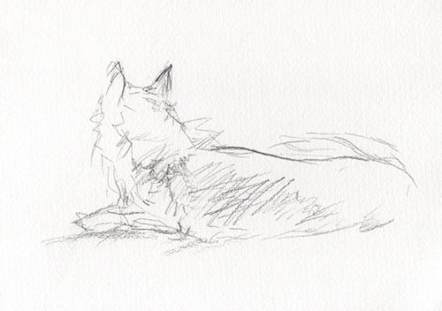 Kitsune 1   graphite on paper  2015