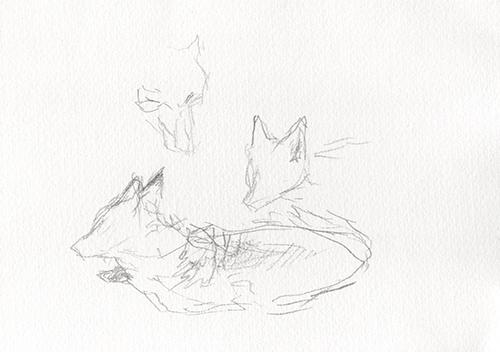 Kitsune 2   graphite on paper  2015