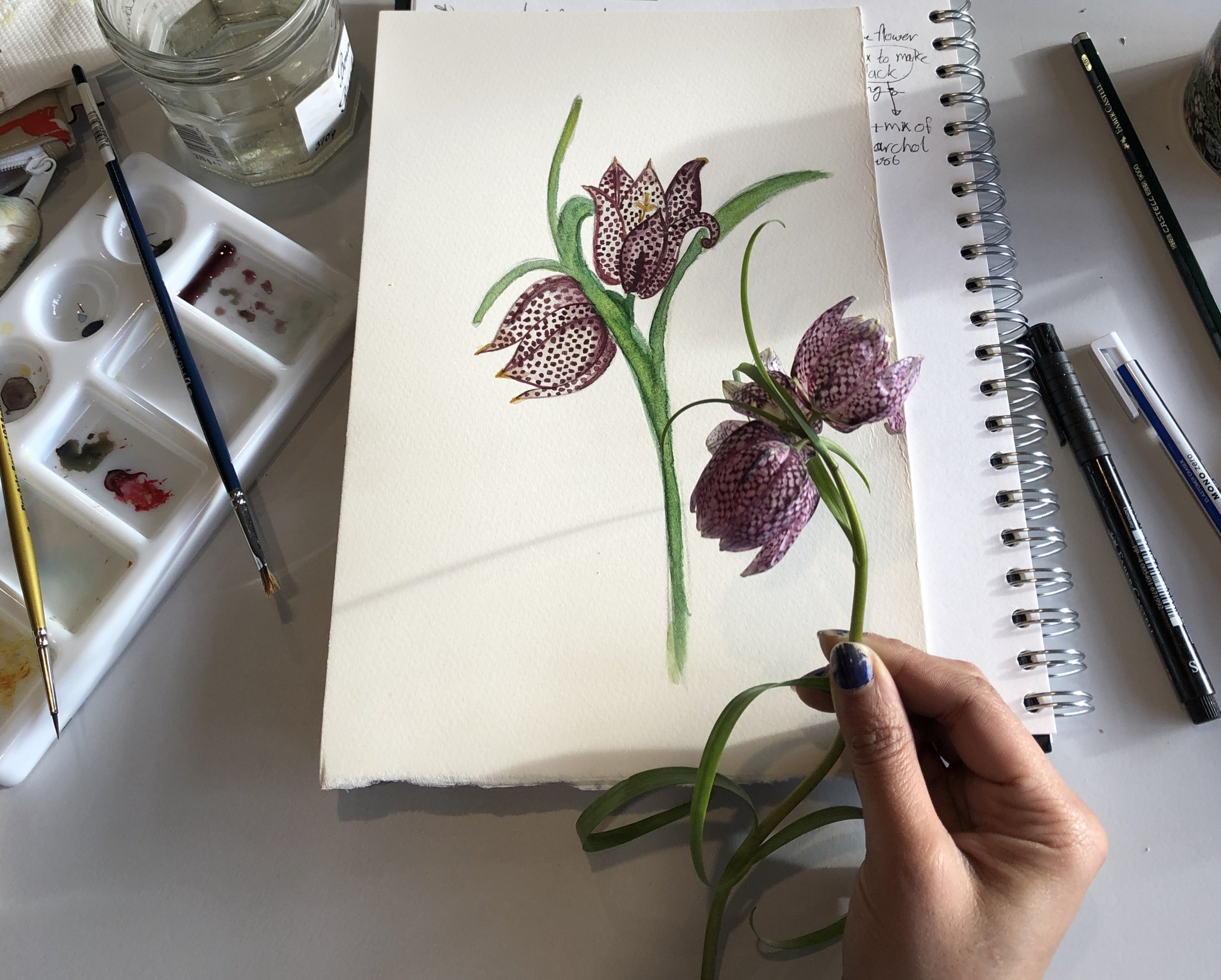 Things I learnt from the Botanical Illustration and Taxonomy