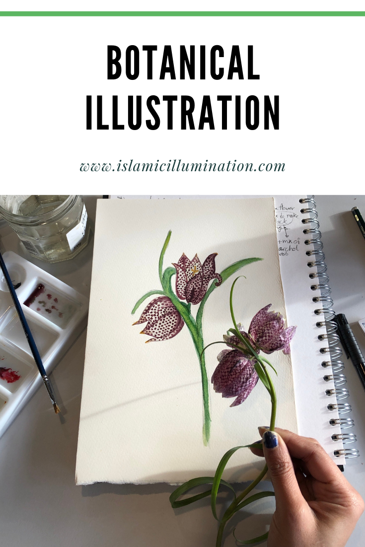 Botanical Illustration and Botany in Art