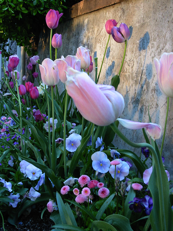 Flowers at Brigham's Wall