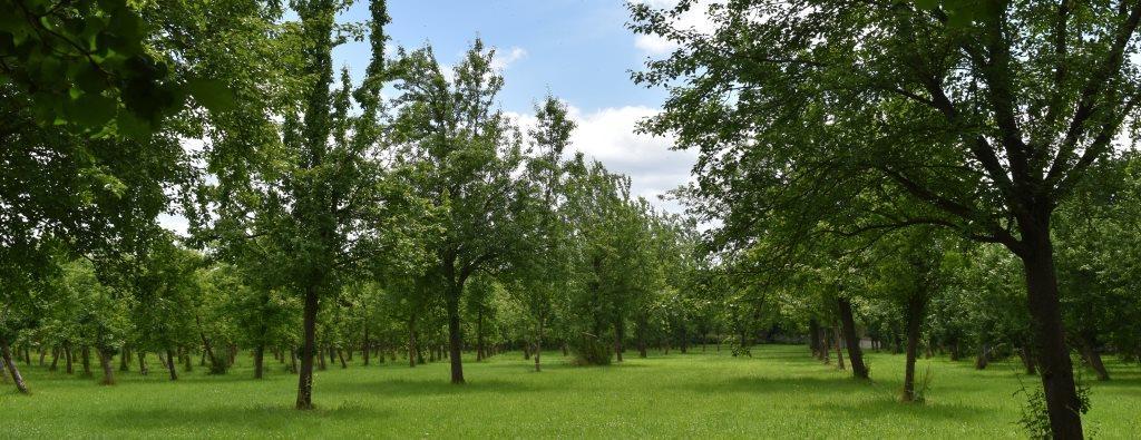 orchard-04.jpg