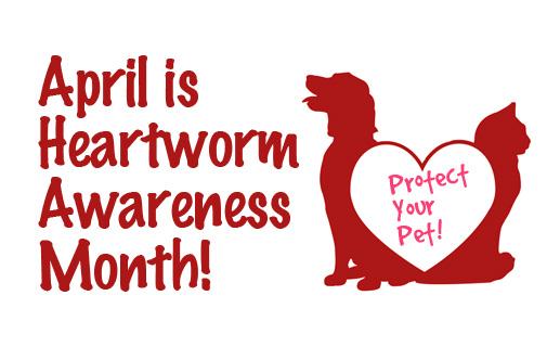 heartworm_awareness_month-517x320.jpg