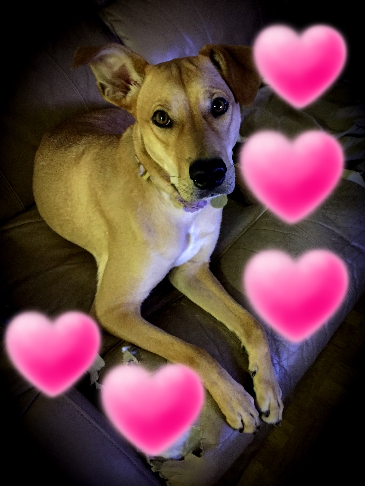 PEANUT BUTTER: 2 yr old hound mix. My favorite thing to do is chew up furniture and eat gourmet meats.